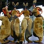 Stilt Kangaroos