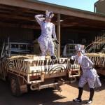 Zebras Melbourne 2