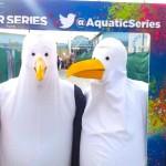 Seagulls Aquatic event Perth event